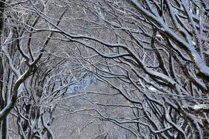 雪に覆われたセントラルパークの並木の写真素材 [FYI02650674]
