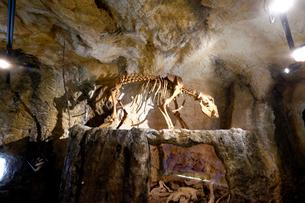 頭蓋骨と骸骨の写真素材 [FYI02650681]
