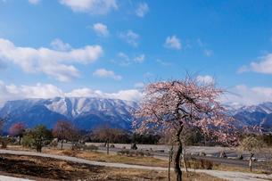 梅と鈴鹿山脈の写真素材 [FYI02650683]