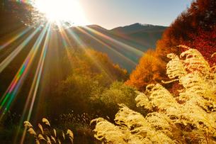ゼロ磁場の水場付近から望む分杭峠の紅葉の樹林とススキと夕日の写真素材 [FYI02650756]