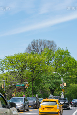 セントラルパークイースト地区のストリートとセントラルパークの新緑の写真素材 [FYI02650840]