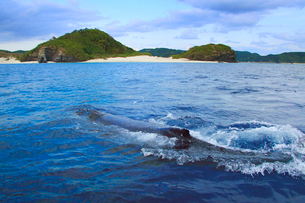 近寄るザトウクジラと嘉比島の夕景の写真素材 [FYI02650993]