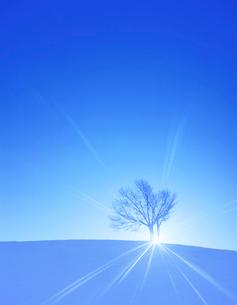 雪原と兄弟桜の木の写真素材 [FYI02651110]