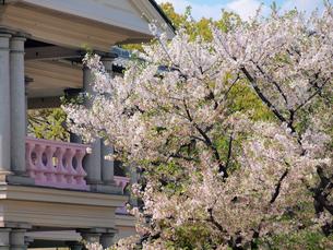 泉布観と桜の写真素材 [FYI02651162]