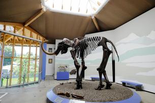 マンモスの骨格標本の写真素材 [FYI02651182]