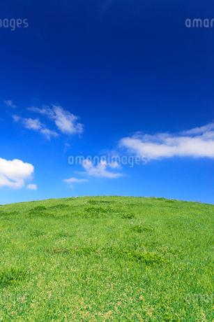 八幡原史跡公園の芝生の写真素材 [FYI02651258]
