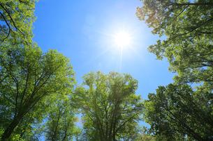 太陽を包み込むセントラルパーク新緑の写真素材 [FYI02651264]