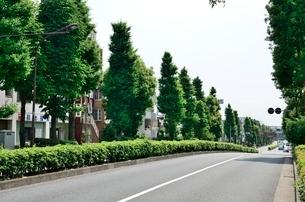 都道放射七号線の並木道の写真素材 [FYI02651404]