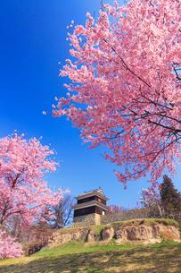 上田城の西櫓と桜の写真素材 [FYI02651585]