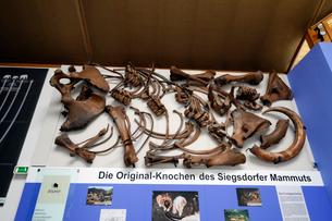 頭蓋骨と骸骨の写真素材 [FYI02651646]