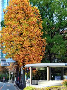 色づく木々と道の写真素材 [FYI02651688]