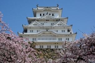 桜が咲く姫路城 大天守閣の写真素材 [FYI02651823]