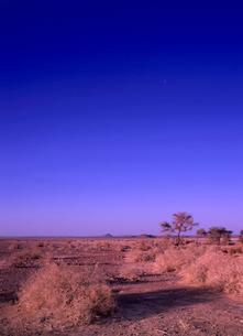 ネフド砂漠の朝の写真素材 [FYI02651825]