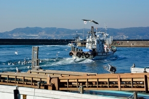 神戸 垂水漁港 イカナゴ漁船が帰るの写真素材 [FYI02651969]