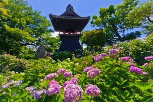 能護寺のあじさいと鐘楼の写真素材 [FYI02652011]