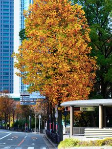 色づく木々と道の写真素材 [FYI02652020]