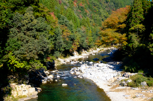 板取川の紅葉の写真素材 [FYI02652062]