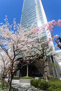 青空とビルと桜の写真素材 [FYI02652199]