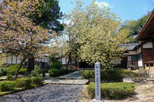 鬱金桜と西福寺書院庭園の写真素材 [FYI02652388]