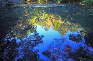 水面に映る景色の写真素材 [FYI02652406]