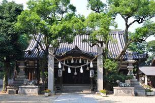 英賀神社本殿の写真素材 [FYI02652466]
