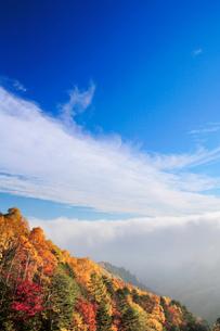 紅葉樹林と雲海の写真素材 [FYI02652488]