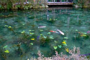 モネの池の写真素材 [FYI02652541]