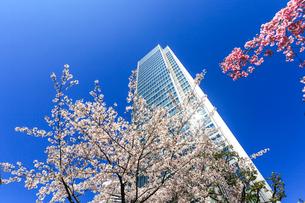 青空とビルと桜の写真素材 [FYI02652562]