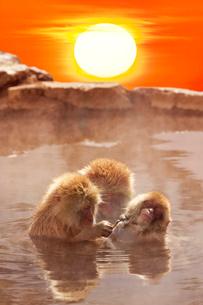 温泉猿と日の出の写真素材 [FYI02652596]