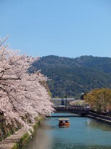 桜咲く鴨東運河(おうとううんが)と十石舟(じゅっこくぶね)の写真素材 [FYI02652666]