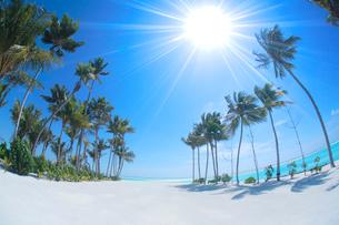 ヤシの木と太陽と砂浜の写真素材 [FYI02652673]