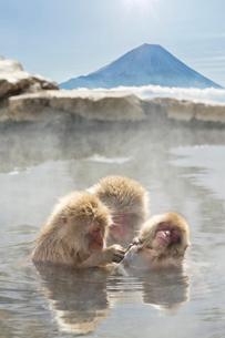 温泉猿と富士山の写真素材 [FYI02652691]