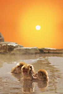 温泉猿と日の出の写真素材 [FYI02652791]