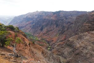 キャニオントレイルから望むワイメア渓谷の写真素材 [FYI02652819]