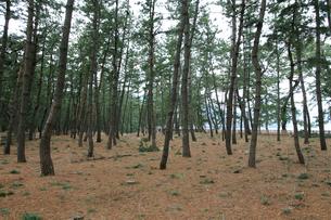 気比の松原 散策路の写真素材 [FYI02652856]
