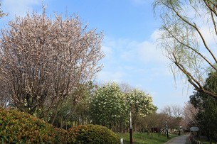 蘇州 寒山寺風景区自然公園の春の花の写真素材 [FYI02652891]