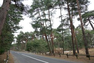 気比の松原 散策路の写真素材 [FYI02652918]