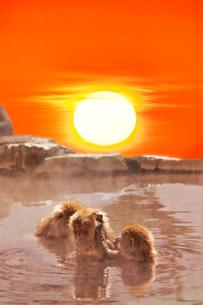 温泉猿と日の出の写真素材 [FYI02653021]