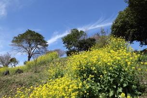 春景色の写真素材 [FYI02653044]