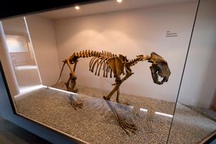恐竜の骨格標本の写真素材 [FYI02653070]