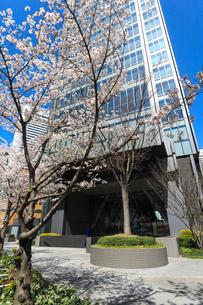 青空とビルと桜の写真素材 [FYI02653208]