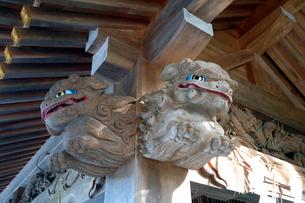 白山比咩神社狛犬の彫刻の写真素材 [FYI02653229]