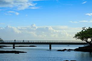 ハワイ島のココナッツアイランドとヒロ湾の写真素材 [FYI02653355]