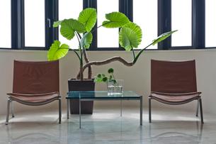 観葉植物と椅子とテーブルの写真素材 [FYI02653446]