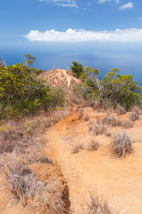 カウアイ島のホノプトレイルの写真素材 [FYI02653497]