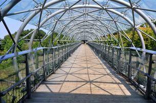 とっとり花回廊 フラワードームから展望回廊の写真素材 [FYI02653521]