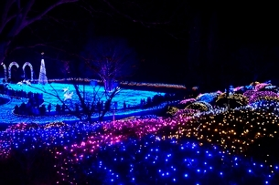 るり渓温泉,京都イルミエ-ル,天空の森の写真素材 [FYI02653656]