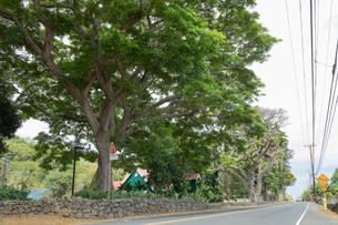 ハワイ島のマークトゥエインモンキーポッドツリーの写真素材 [FYI02653676]