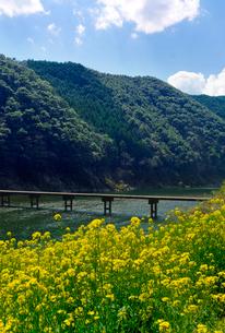 菜の花と岩間沈下橋の写真素材 [FYI02653677]