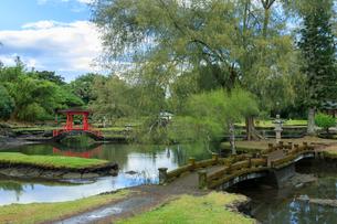 ハワイ島のリリウオカラニ庭園の写真素材 [FYI02653717]